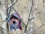 Painted bird houses in the PEC garden