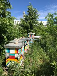 PEC honey bees