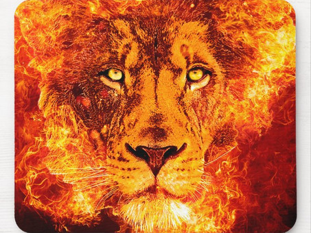 The Lion Roars -Vision Election 2020 - Augusto Perez