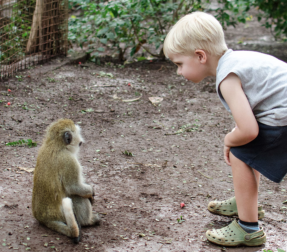 Meeting a new friend (vervit monkey)