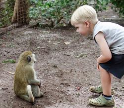 Meeting a new friend (vervit monkey)