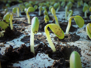 Start Plants from Seed and Free Seed Program
