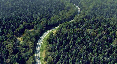 den-brooks-forest-vray.jpg