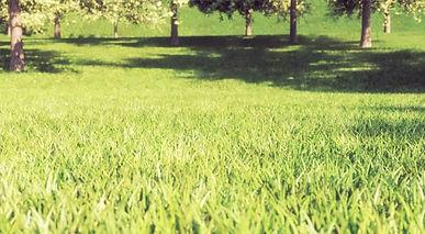 Grass_and_Fur.jpg