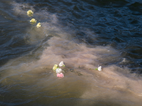 Cremated ashes are seen scattered with carnations in the San Francisco Bay from the Neptune Society of Northern California's boat in San Francisco, Calif. Wednesday, April 10, 2019.
