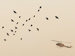 A helicopter attempts to survey the ridge west of Bear Valley Visitors Center through heavy smoke as birds fly overhead in Olmea, Calif. Tuesday, August 25, 2020. Firefighers are working to hold the eastern fire line near Bear Valley Visitors Center and northern line south of Limantour Road. The Woodward Fire stands at 2,739 acres and is 5% contained as of Tuesday.