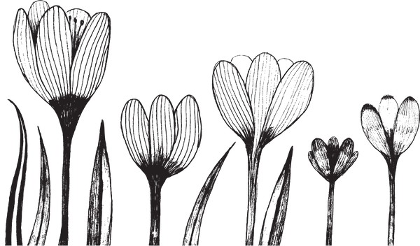 165725330 [Converted]flowers.png