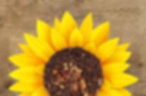 Carob-Sunflower_edited.jpg