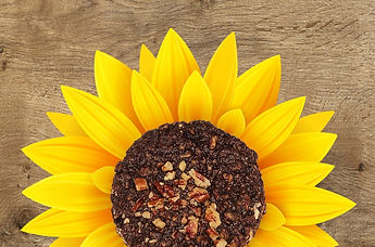 Carob-Sunflower_edited.jpg