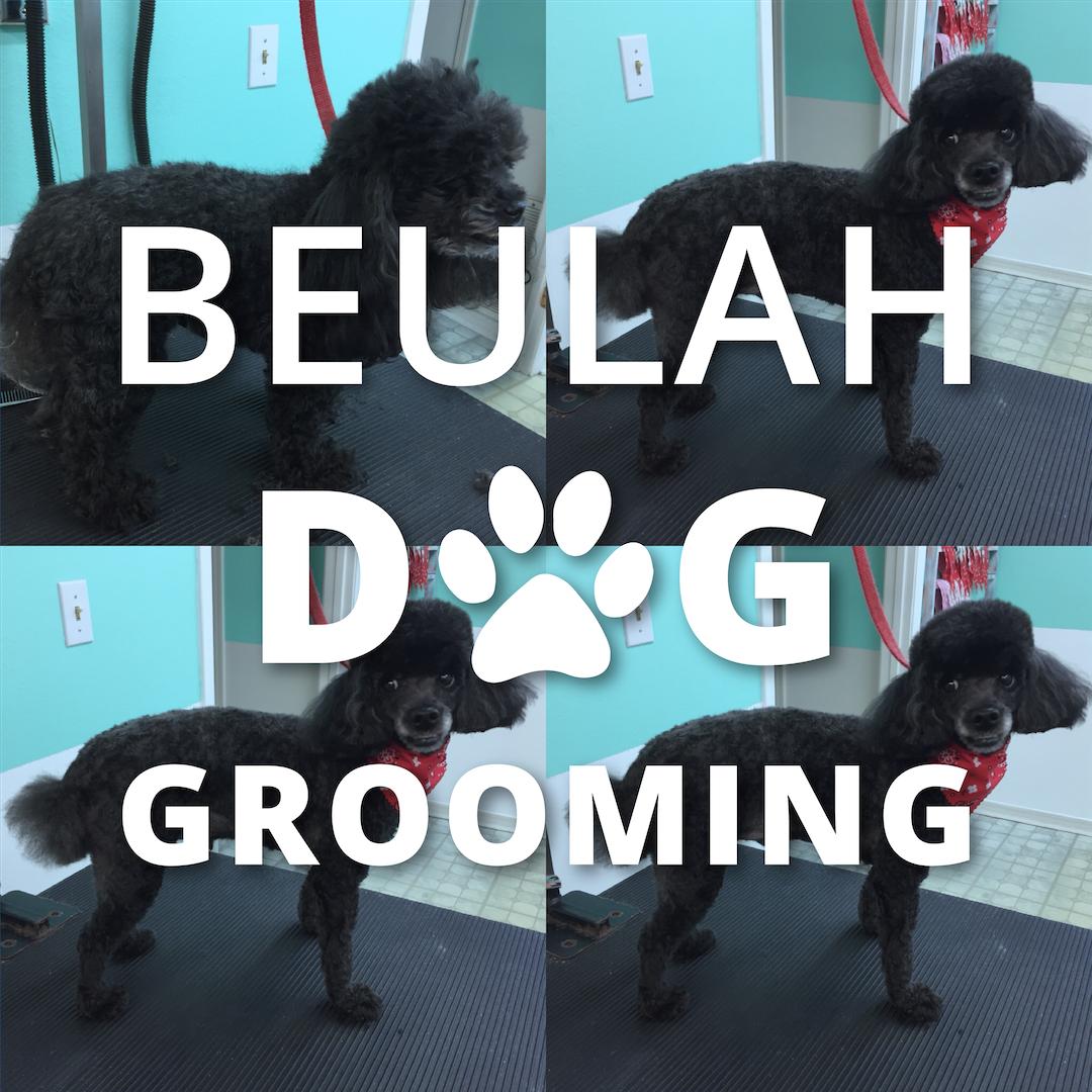 dog grooming pensacola