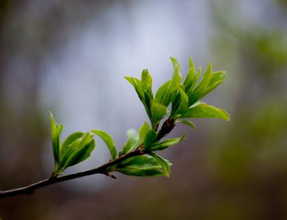 Springtime Coming