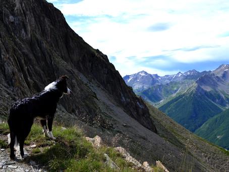 Randonner avec son chien : Notre expérience et nos conseils