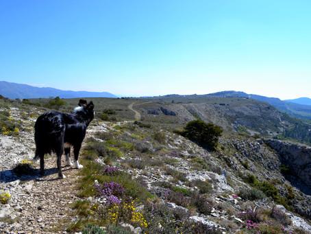 Nos 10 randonnées préférées sur les hauteurs de Grasse