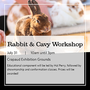 Project Workshop Day 5x5 images - Rabbit.png