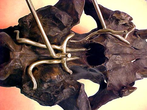 Detail -- Saber Tooth Skull Mount