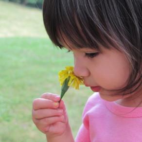Best Sniff Spots Around Viz