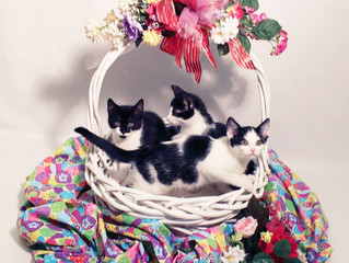 Happy Easter from our Furbabies!
