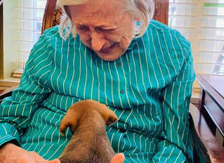 Humane Society offers Special Visits