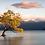 Thumbnail: Lone Tree of Lake Wanaka Pendant