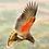 Thumbnail: Flying Kea Pendant