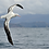 Thumbnail: Albatross Pendant