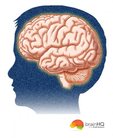 brain-head-04
