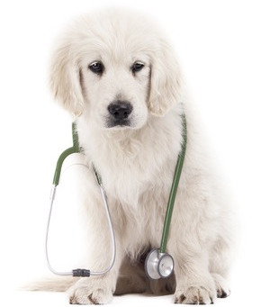 Puppy Vaccines: Why Your Puppy Needs So Many Shots