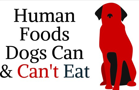 What Human Food Can I Give my Dog?