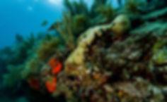 Underwater Photo of scuba location Elbow Reef