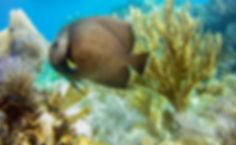 Angelfish photo taken while snorkeling in Key Largo