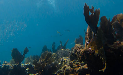 Key Largo snorkeling location Grecian Rocks