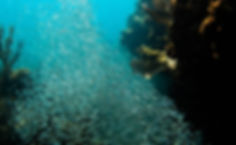 Minnow Cave picture taken whil snorkelng in Key Largo