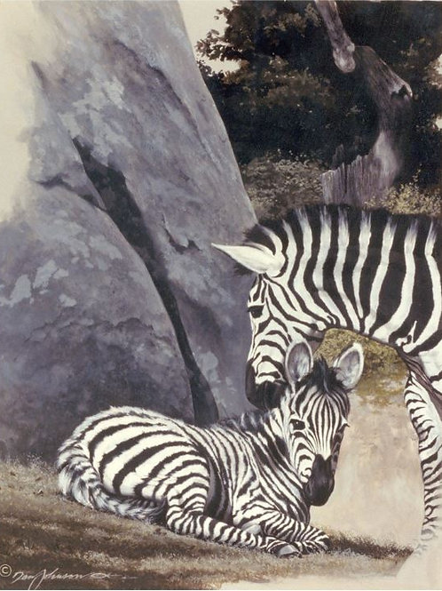 Zebras, NC Zoo
