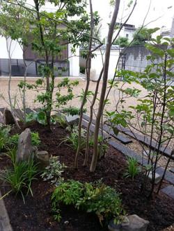 植物の足元はバーク堆肥で覆っています。