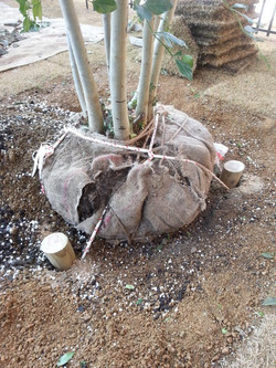 地下支柱施工の様子。土中に杭を3本打込み、ロープで固定。