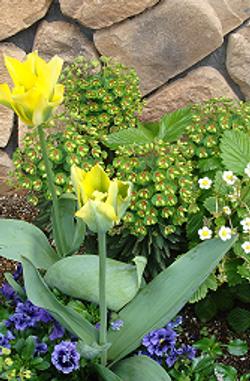黄色い花で全体を明るい印象に