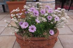 春の寄せ植えの一例