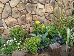 同系色の植物でも、形に変化が出るようにコーディネート