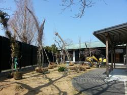 工事開始直後に高木を搬入した様子。