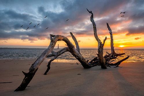 Sea Salt & Driftwood