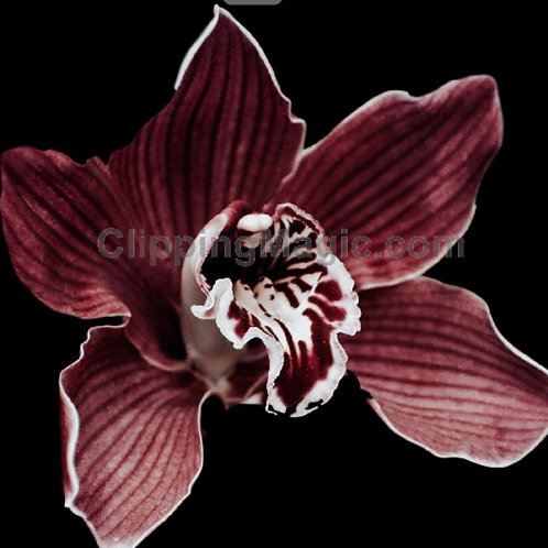 3 Wick Orchid Noir