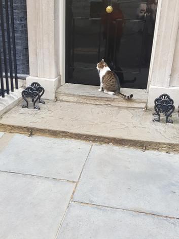 6 larry-the-cat.jpg
