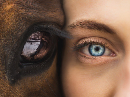 Animal-Assisted Interventions: The Power of the Human-Animal Bond