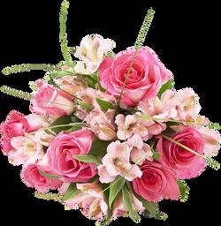 Rose Alstro Bqt