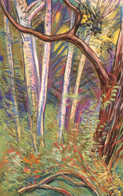 Sherwood Sunset Oaks Aspens