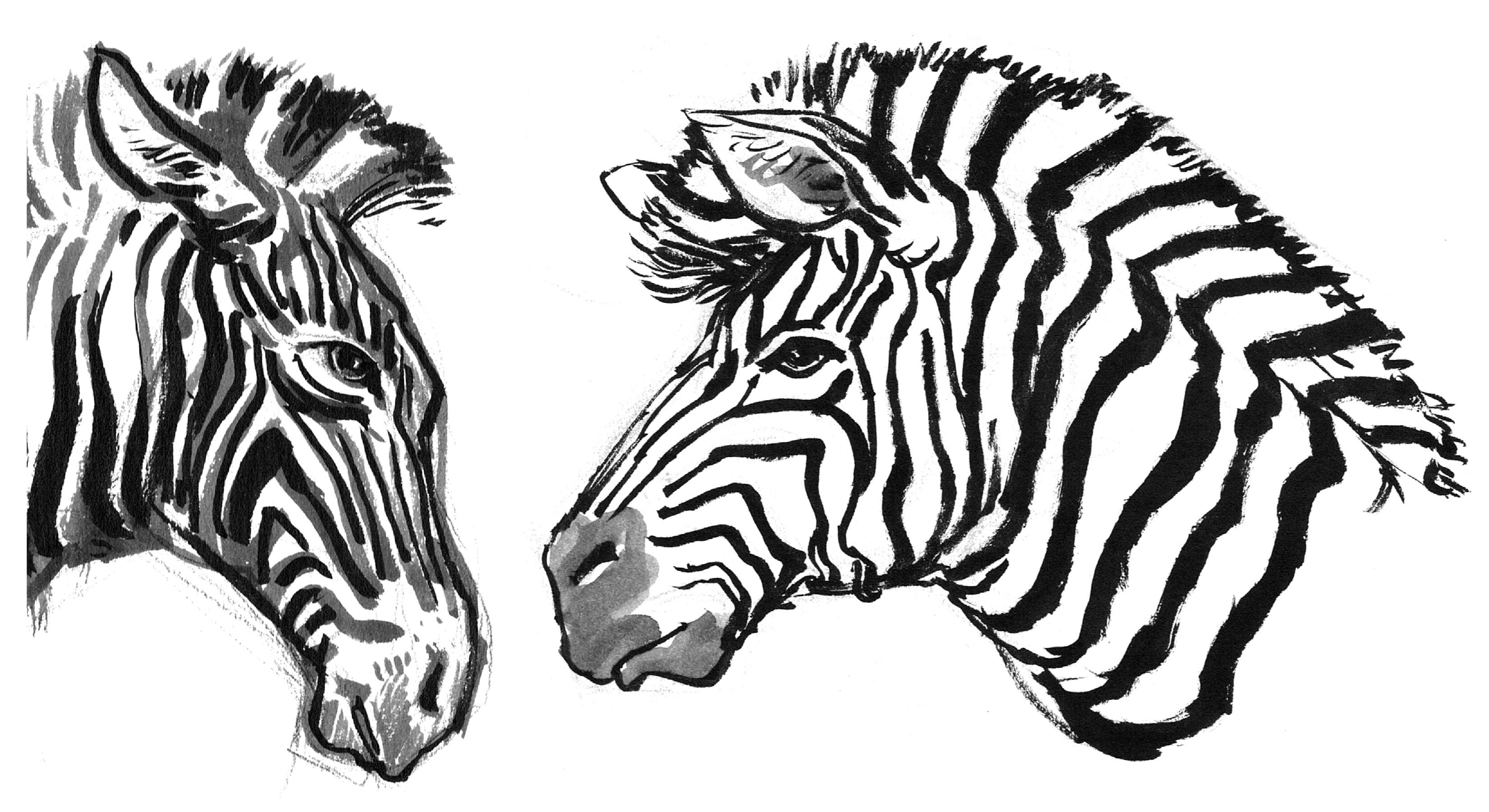 Zebra 2 Heads SIDE