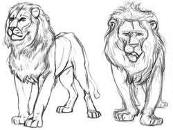 Cat Lions Alphas FRT