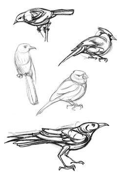 Bird Cardinals & Wrens 2