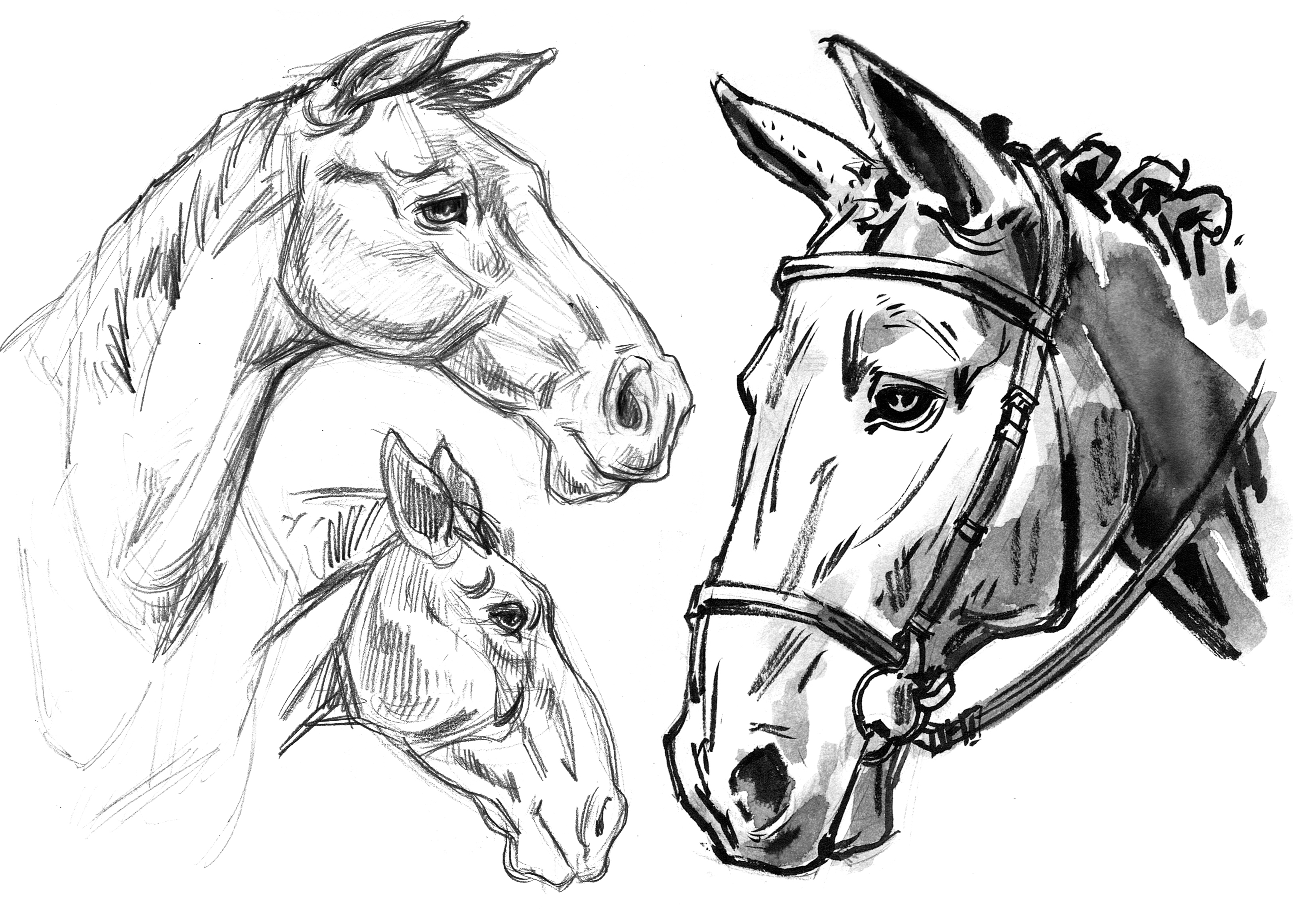 Horse Draft & Quarter Heads