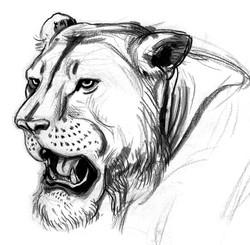 CAT Lioness Nala Head